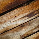 Dlaczego warto rozróżniać rodzaje drewna?